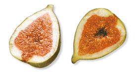Atlante visuale for Pirus pianta
